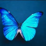 fluturii dragostei
